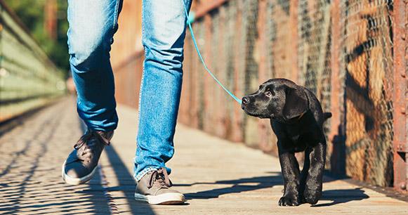 tips de obediencia para perros