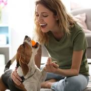consejos para educar a un perro