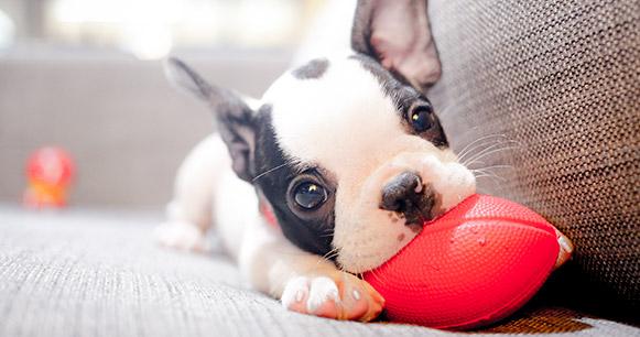 cuidados para un cachorro