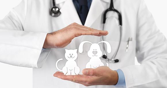 seguro de salud para mascotas
